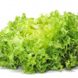 Stock Photo: Escarole endive