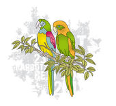 Vector colorful couple of parrots on branche — Stock Vector
