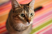 Young tabby cat — Stock Photo