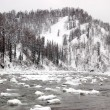The winter river in a taiga — Stock Photo