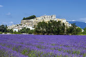 Lavender field and village — Stock Photo