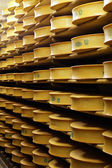 Cheese industry — Stock Photo