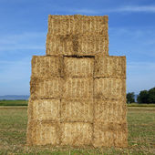 Wheat square — Stock Photo