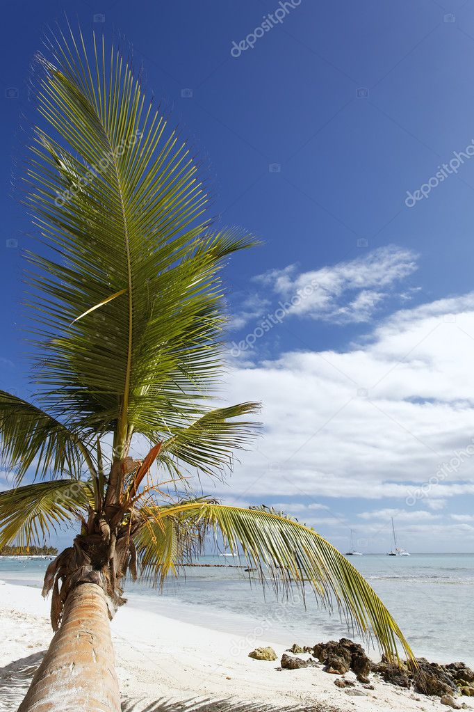 Beach — Stock Photo #4668025