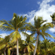 Stock Photo: Palms in sky