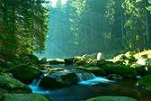 Nice brook on autumn day — Stock Photo