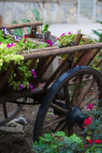 Garden wooden cart with flowers on it — Stock Photo