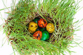 Easter colorful eggs on grass — Stock Photo