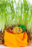 Easter colorful eggs near grass on decorative nest — Stok fotoğraf