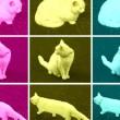 Pop Art cat — Stock Photo