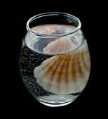 Transparent glass with mineral water and sea cockleshell — Stock Photo