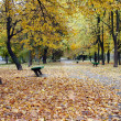 Park alley in autumn — Stock Photo