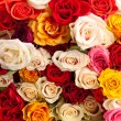 Stock Photo: Background of colorful roses