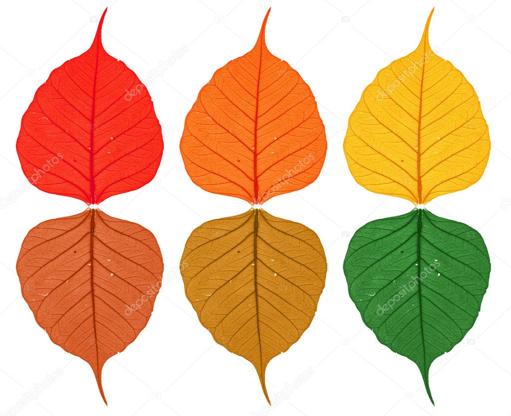 Six autumn leaf on white background — Stock Photo #4888538