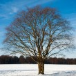 Stockfoto: Landscape in winter