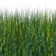 Stock Photo: Rendered grass field