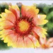 Stock Photo: Watercolor picture of flower