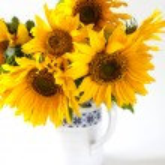 Sunflowers in vase — Stock Photo