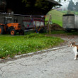 Landscape with a young cat in swiss countryside — Stock Photo
