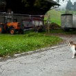 Stock Photo: Landscape with a young cat in swiss countryside