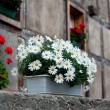 Stok fotoğraf: House wall decorated by flowers