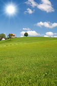 Countryside landscape with greeen grass, blue sky, beautiful clouds and a tree — Stock Photo
