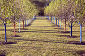 Tree rows in the park — Stock Photo