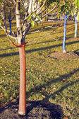 若い木 — ストック写真