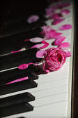 Pink rose flower on piano keys — Stock Photo
