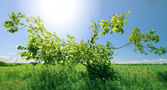 Spreading green tree in sunny day — Stock Photo