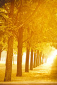Autumn alley in gold — Stock Photo