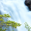 Firry branches and waterfall in background — Stock Photo #4738408
