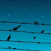 Birds On Wires — Stock Vector