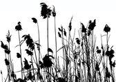 Vector Reeds — Stock Vector
