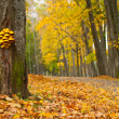 Royalty-Free Stock Photo: Golden autumn
