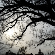 Silhouette of tree branches — Stock Photo
