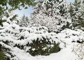 Zimní zahrada. — Stock fotografie