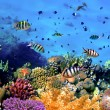 Stock Photo: Corals reef