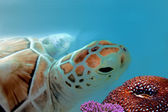Curious looking turtle — Stock fotografie