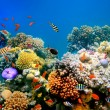 Tropical Fish on coral reef — Stock Photo #4597976
