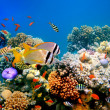 Tropical Fish on a coral reef — Stock Photo #4598022
