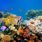 poissons tropicaux sur un récif de corail — Photo
