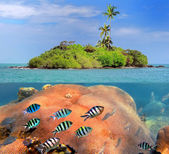 Coral island — Stock Photo