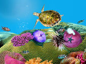 Green turtle underwater on a coral — Stock Photo