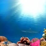 An underwater scene with sun rays — Stock Photo