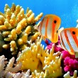 Coral reef and Copperband butterflyfish — Stock Photo #5035785