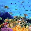 Beautiful Corals and Fish — Stock Photo