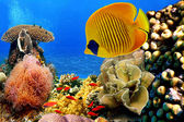 Photo of a coral colony — Stock Photo