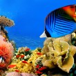 Photo of a coral colony — Stock Photo #5135132