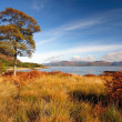 Stock Photo: Auyumn in Lochaber.